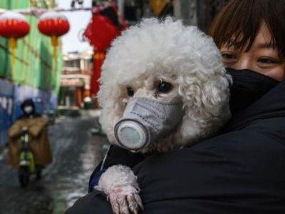 حیوانات خانگی به ویروس کرونا مبتلا میشوند؟